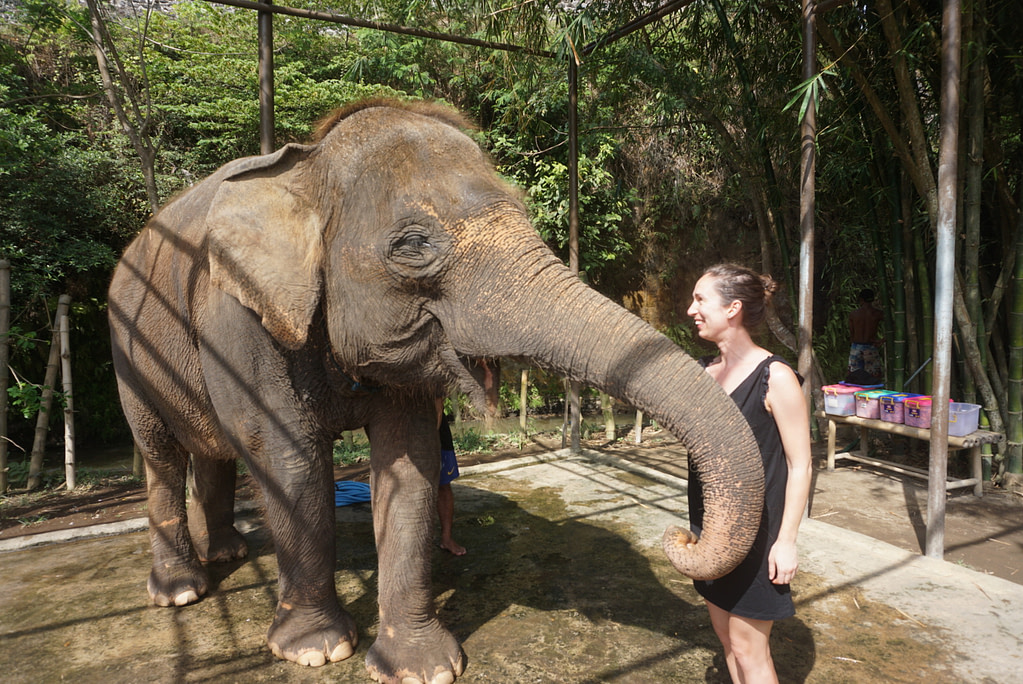 young woman in black dress feeding elephant outdoors at bali zoo