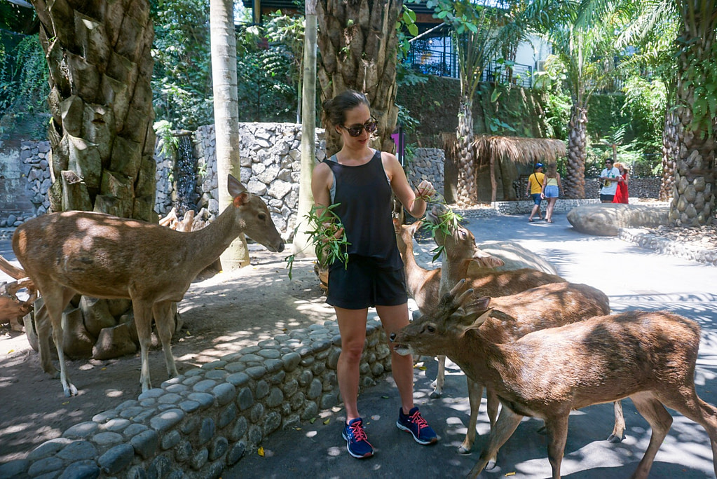five deer surround young woman in black shorts, black singlet, blue shoes and sunglasses feeding them branches