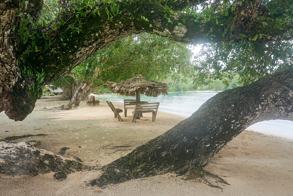 wooden table and chairs with thatched sun umbrella viewed through trees on beach beside blue water