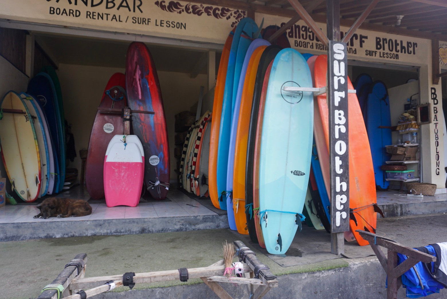 surboards stacked up for hire with a brown dog resting nearby
