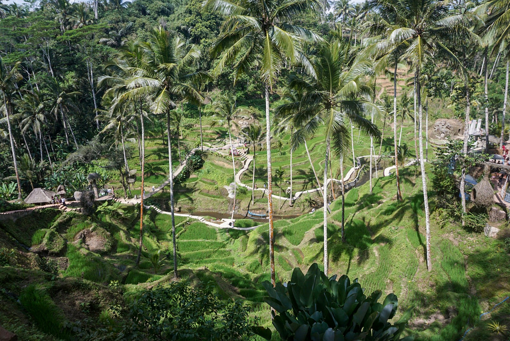terraced plantation in Bali Indonesia