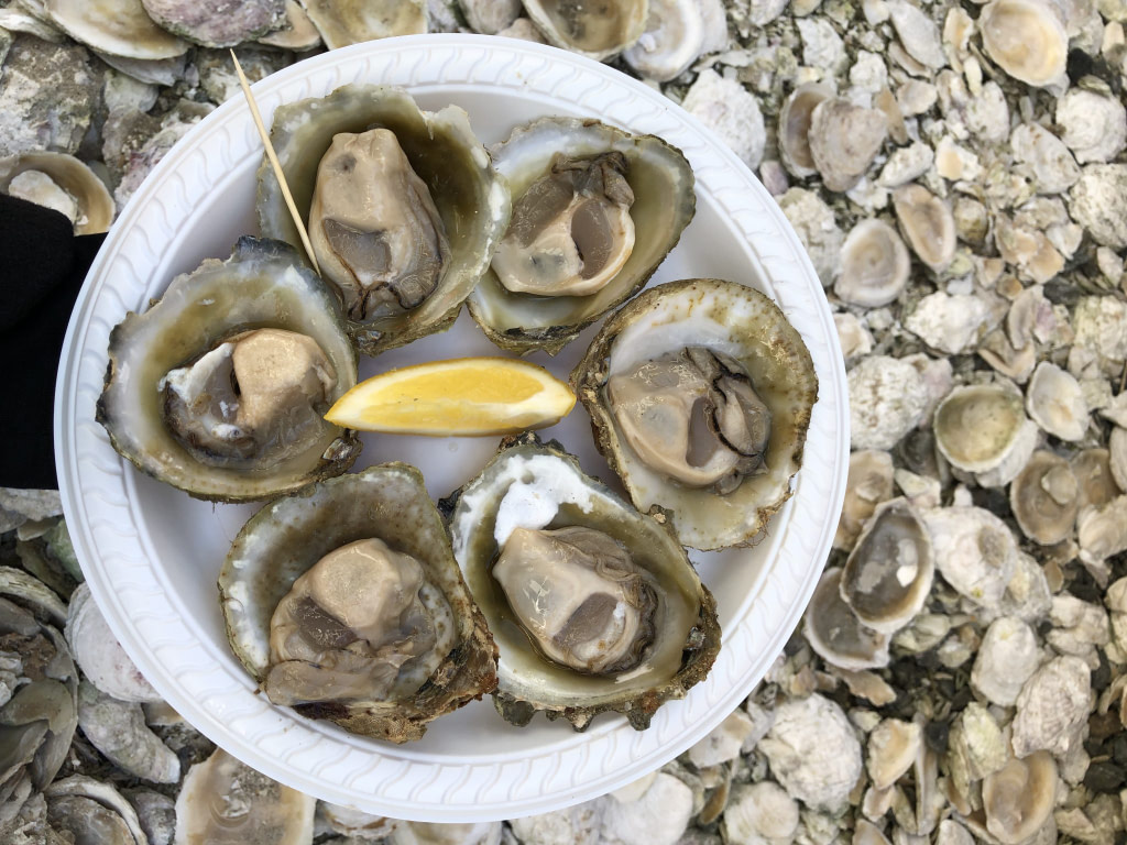 a white plate containing 6 bluff oysters in their shells a toothpick and wedge of lemon