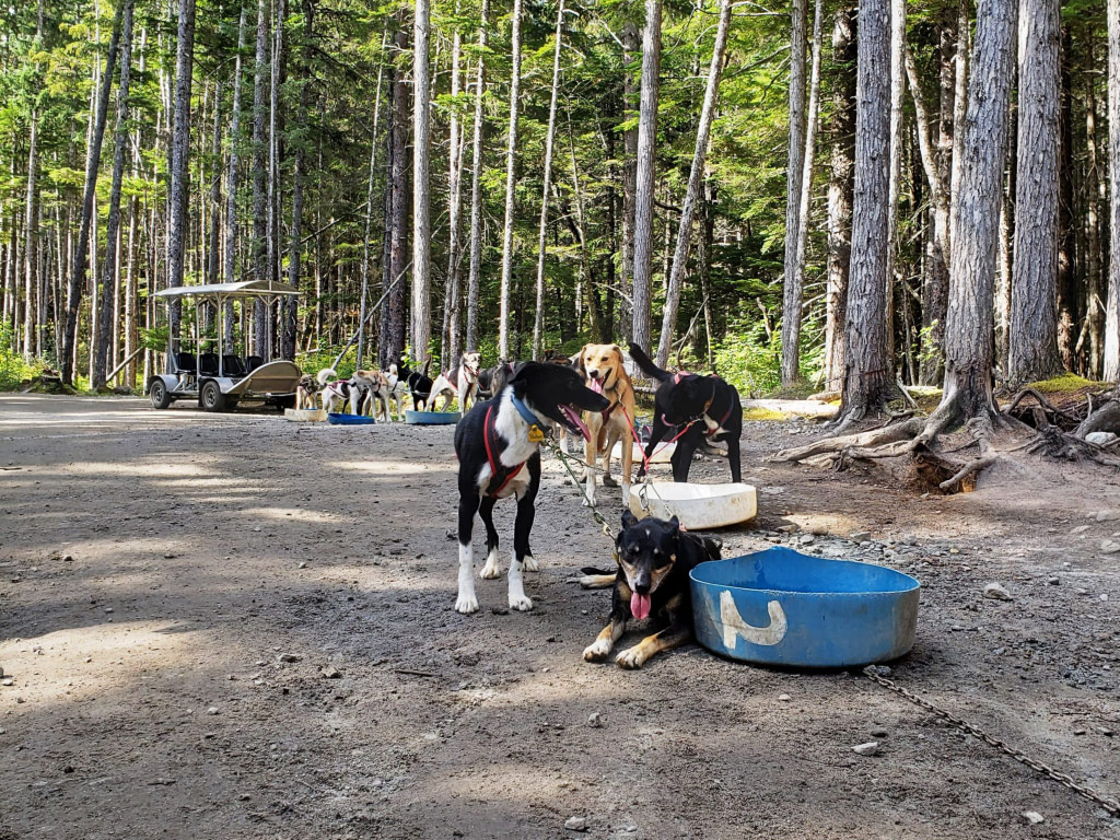 Sled Dogs in Skagway Alaska cuise excursion