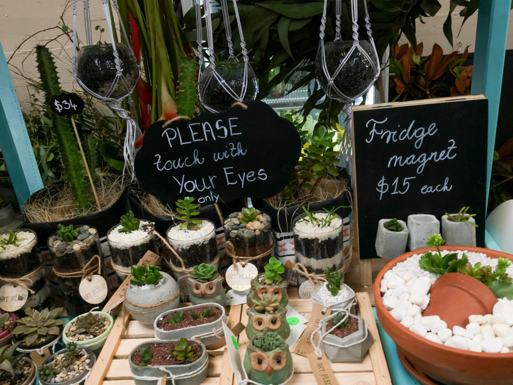 Small plants for sale at Catalina Bay Markets Hobsonville Point