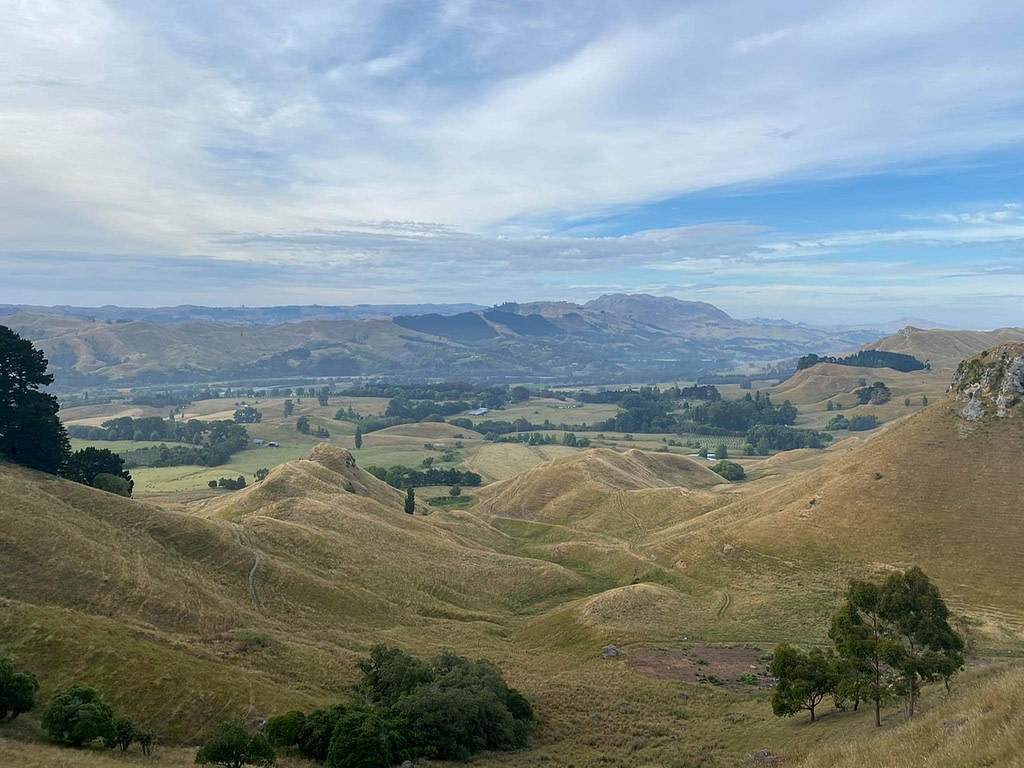view of trees and land from te mata park hike napier