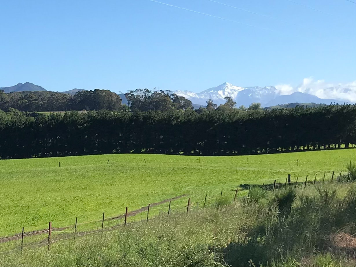 South Island farm with snowy moutains in background