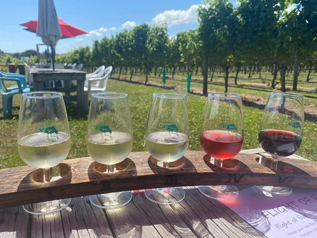 Tasting flight of five wines at Margrain vinyard martinborough